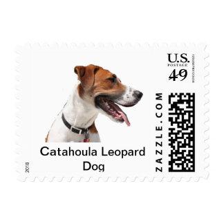Buddy, the Catahoula Leopard Dog Stamp