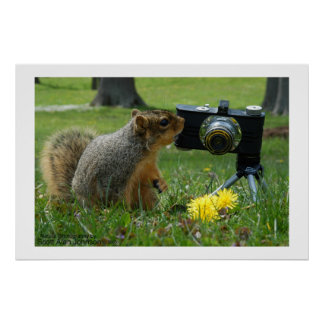 Buddy The Squirrel and his Camera Poster