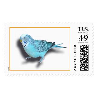 Budgerigar Stamps