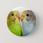 I Love Budgerigars Realistic Painting Button