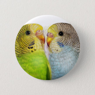 Budgerigars realistic painting button