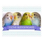 I Love Budgerigars version