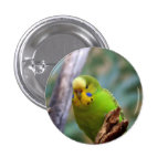 Budgie 1 Inch Round Button