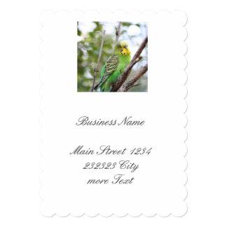 budgie 5x7 paper invitation card