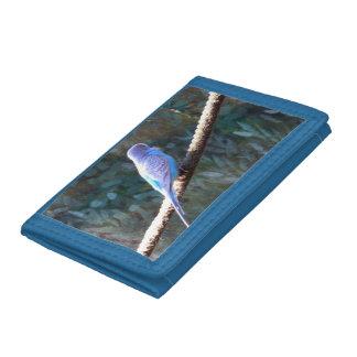 Budgie azul