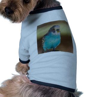 Budgie azul camisetas mascota