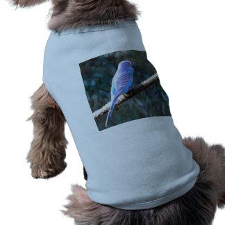 Budgie azul camisa de perrito
