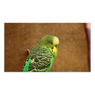 Budgie Bird Business Card