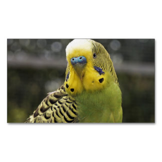 Budgie Bird Business Card Magnet