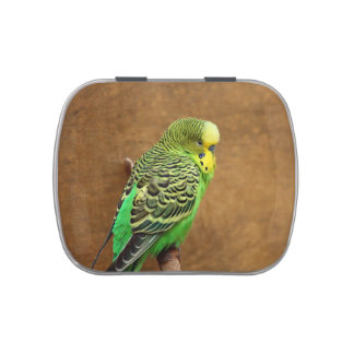 Budgie Bird Jelly Belly Candy Tin