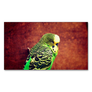 Budgie Bird Magnetic Business Card