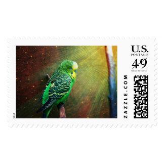 Budgie Bird Postage Stamp