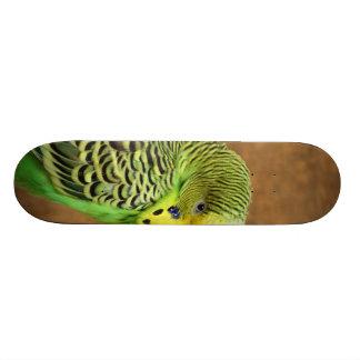 Budgie Bird Skateboard Deck