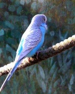Parrot Bird Beauty Products Zazzle