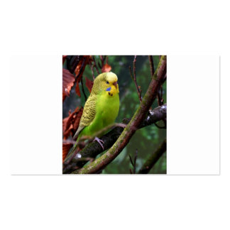 Budgie Business Card Templates
