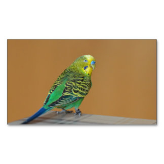 Budgie Business Card Magnet