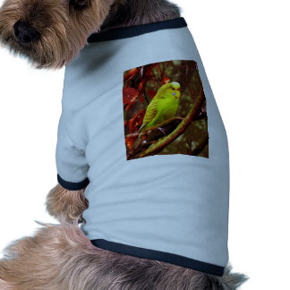 Budgie dulce ropa de perros
