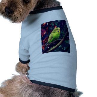Budgie dulce camisetas mascota
