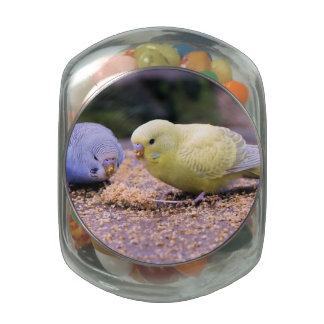 Budgie Glass Candy Jars