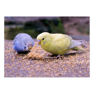 Budgie Large Business Card