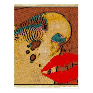 Budgie Love Postcard