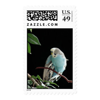 Budgie mail with Mr. Jill! Stamp