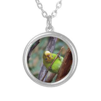 Budgie Custom Jewelry