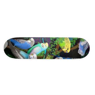 Budgie Parakeets Skateboard