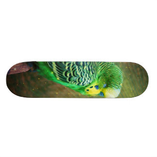 Budgie Patines