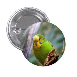 Budgie Pin Redondo De 1 Pulgada