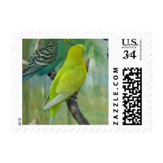 Budgie Postage Stamp