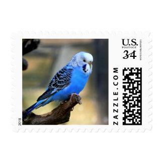 Budgie Stamp