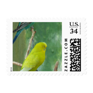 Budgie Postage Stamps