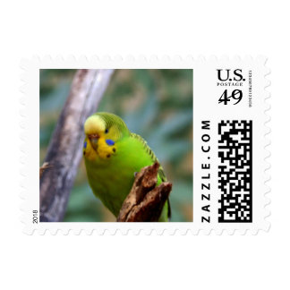 Budgie Stamps