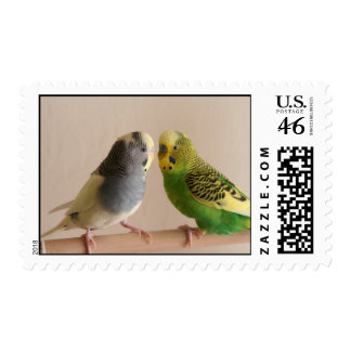 Budgie Postage Stamp