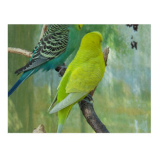 Budgie Post Cards