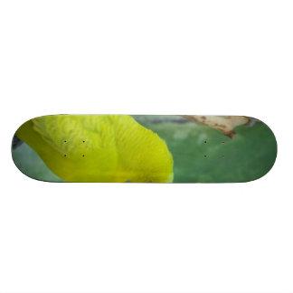 Budgie Skate Board Decks