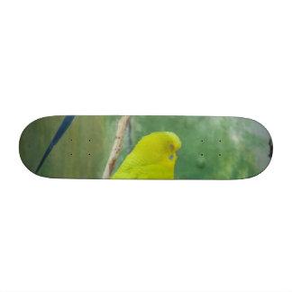 Budgie Skate Deck