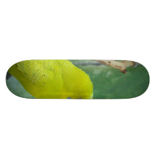 Budgie Skate Decks