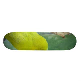 Budgie Skate Board