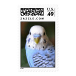 Budgie Stamps!