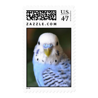 Budgie Stamps! Postage