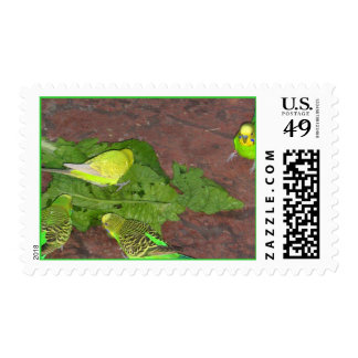 Budgie Timbres Postales