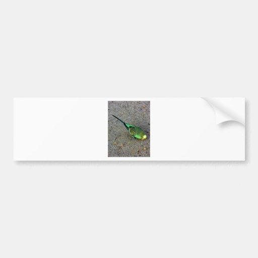 Budgie verde etiqueta de parachoque
