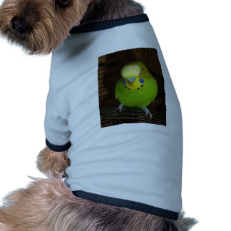 Budgie verde ropa de perros
