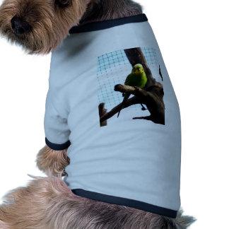 Budgie verde prenda mascota
