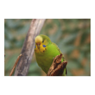 Budgie Wood Canvases