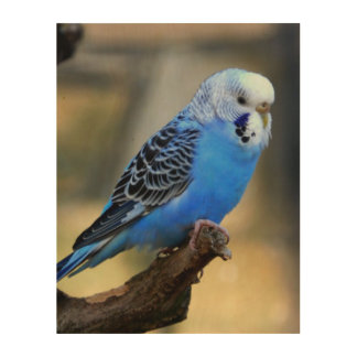 Budgie Wood Canvas