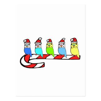 Budgies- Christmas Postcard