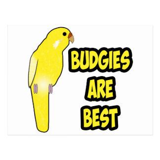 Budgies es el mejor tarjeta postal